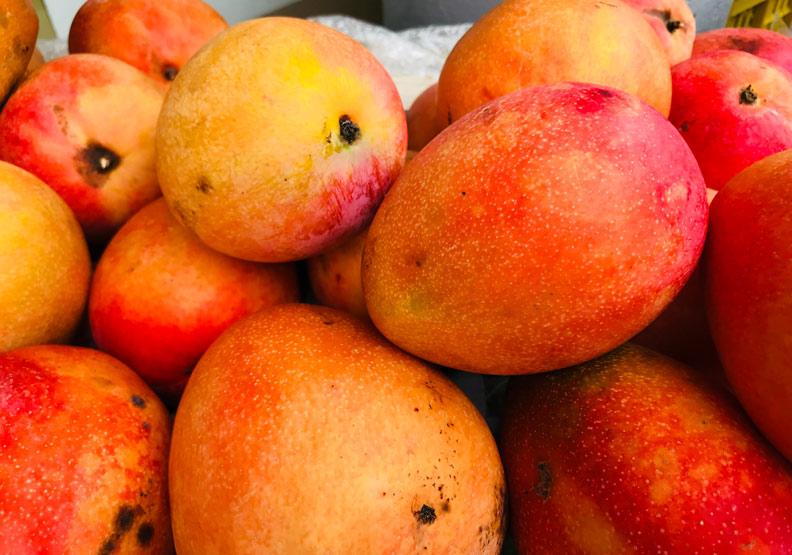 芒果外皮黑斑長愈多愈甜?這些斑點到底怎麼來的?