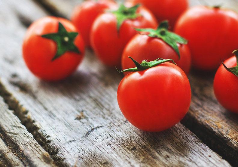 餐桌上的紅色經濟!你知道加工用的「戰鬥番茄」嗎?
