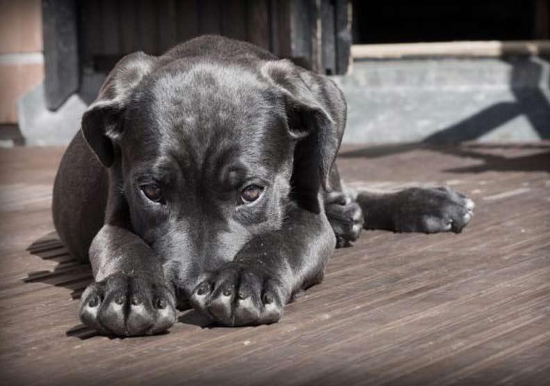 不只巧克力,連木糖醇都對狗很毒
