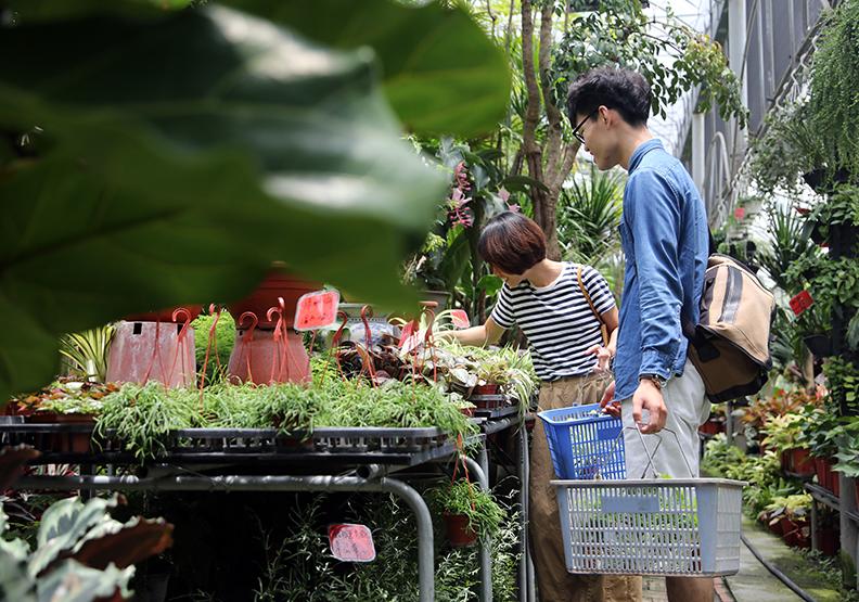 2朵切花有1朵是這裡種的 大員林讓台灣花木揚名國際