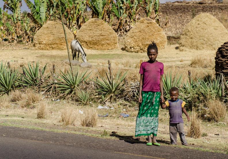 一天種下3.5億棵樹!衣索比亞綠色計畫創下世界紀錄