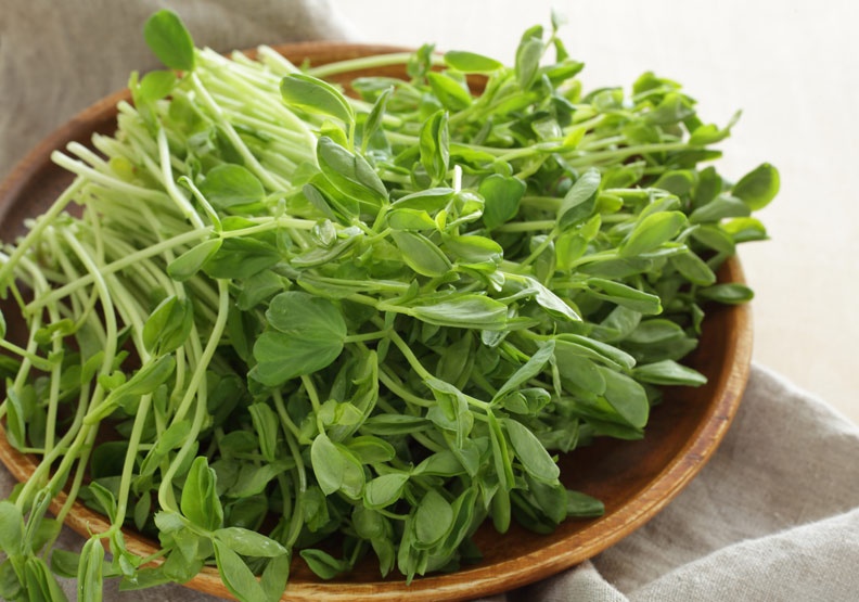 豌豆苗促進代謝又防癌,煮湯食用更能保留營養
