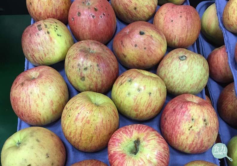 蘋果凹陷長斑點還能吃嗎?這不是爛掉而是「苦痘症」