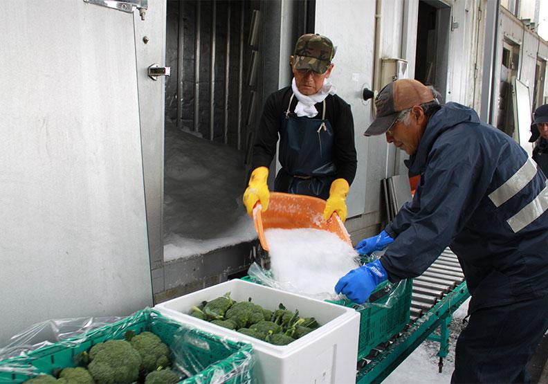 日本最大蔬果配送通路 Farmind教你把水果變好吃