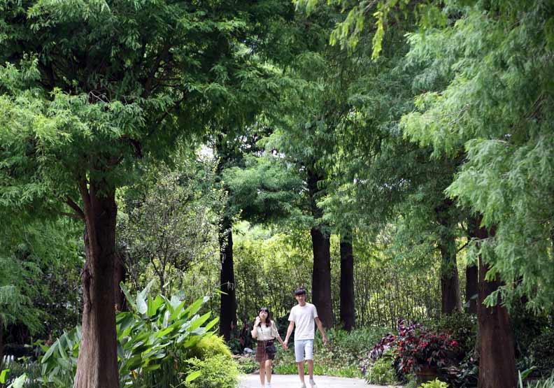 在森林中散步並深深地呼吸,能消除恐懼;陳之俊攝。