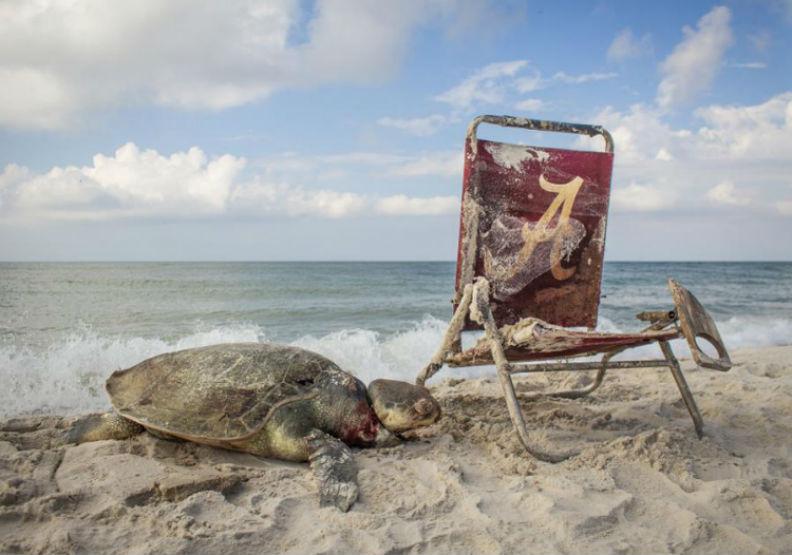 一張瀕死海龜照,揭露人類「謀殺」生物背後真相