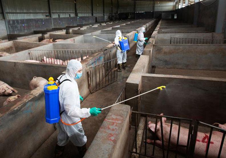 大陸餐桌上恐吃不到豬肉,民生問題演變成國安問題?