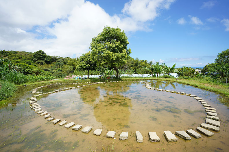 蕭學苑復育家鄉水梯田,並結合農旅觀光,讓遊客感受山林田野風情。