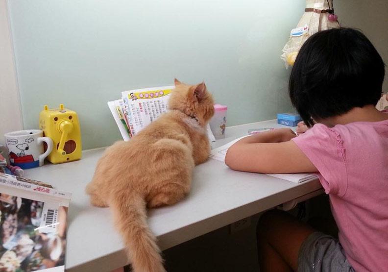 寵物來作伴,解憂特效藥