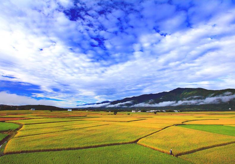 有機農業現在進行式 奠定花蓮幸福未來式