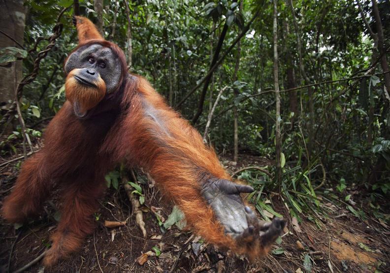 為了它砍掉好多森林!為什麼棕櫚油對環境傷害如此巨大?