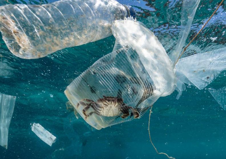 台灣想讓鯨魚、海龜遠離塑膠垃圾惡夢遙不可及?