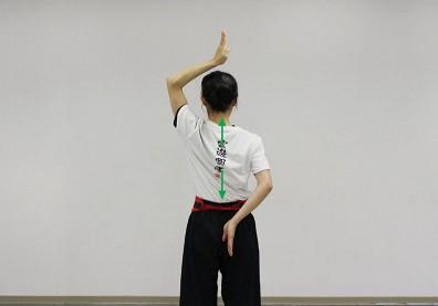 坐著時常弓著身體?練習脊椎「撐拔」讓背部覺醒