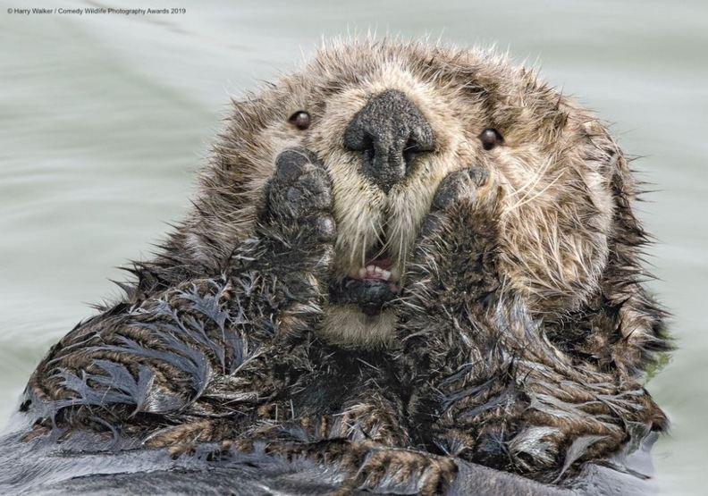 動物也能很搞笑!喜劇攝影獎喚起世人保育意識