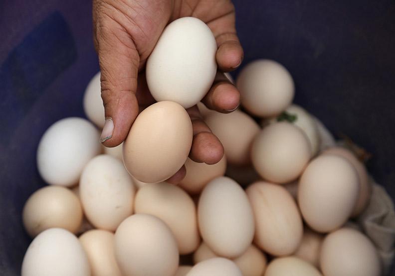 紅殼雞蛋比較營養?雞蛋顏色到底會不會影響營養價值
