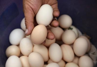 蛋殼顏色VS蛋黃顏色,哪個與營養有關?挑雞蛋前搞懂這些事