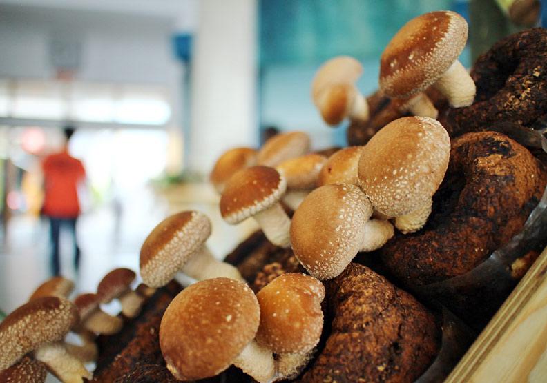菇類富含膳食纖維。