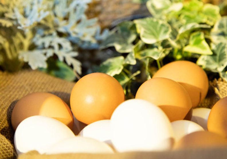鼎泰豐「蛋炒飯」少了這一顆雞蛋,味道就不對了!