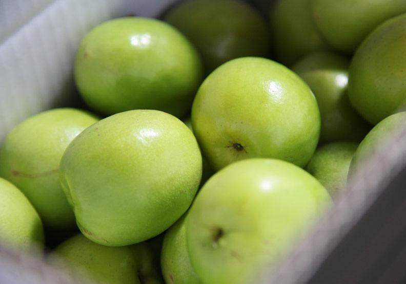 棗子維生素C是水梨的9倍、蘋果的20倍!品質好不好一口就知道