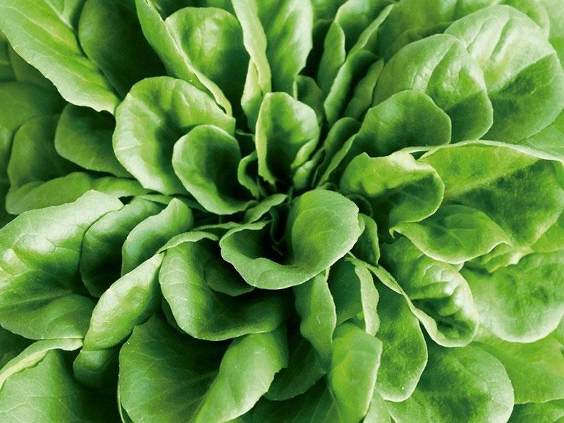 綠葉蔬菜+橄欖油將蔬菜與健康油脂一起吃,可增強葉黃素和β-胡蘿蔔素等抗氧化劑的吸收。