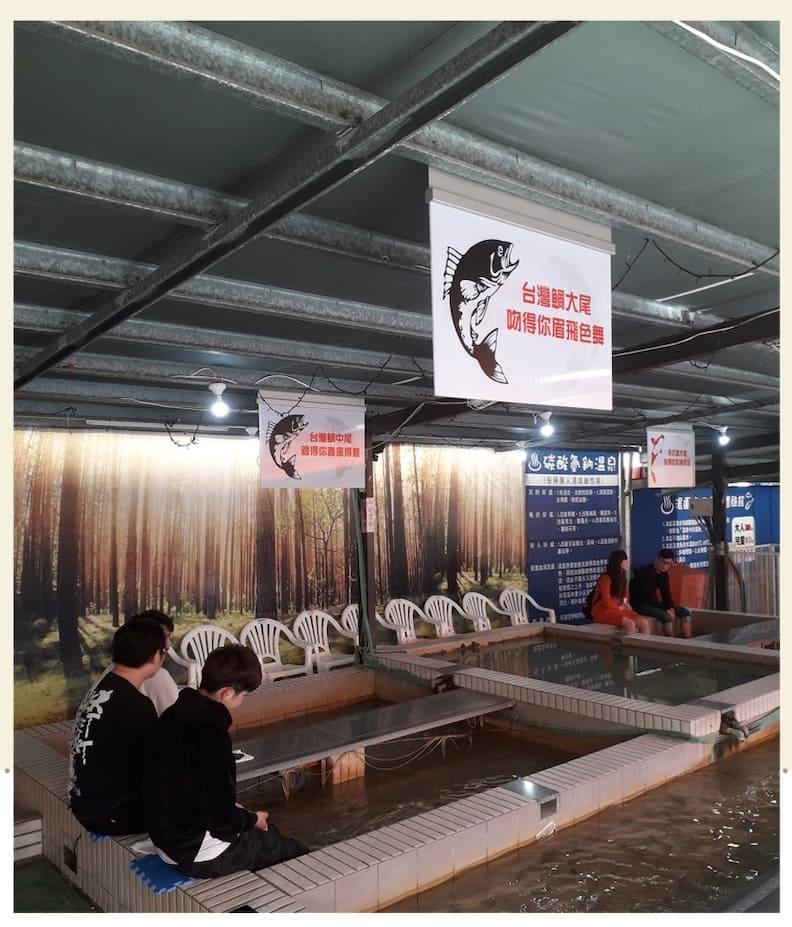 礁溪另類的大型溫泉魚「臺灣鯛」。