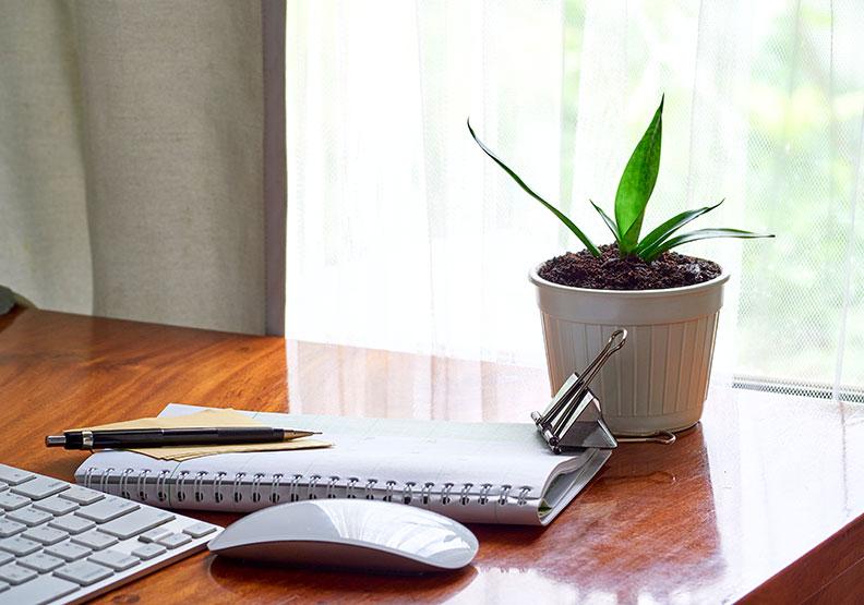 辦公桌擺放植栽,日研究:可紓解工作壓力
