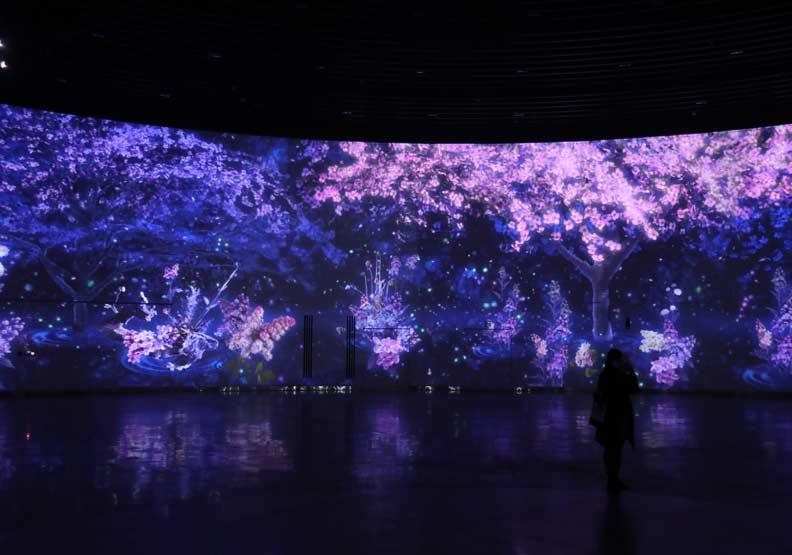 「環˙台中光影燈區」,櫻花投影。