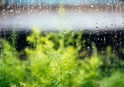 節氣「雨水」該怎麼應對?藏族醫師從生活 5 面向保養身心