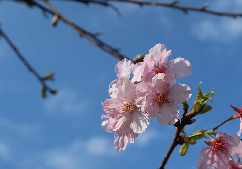 把握春分養肝,飲食作息都要顧才能調理肝氣