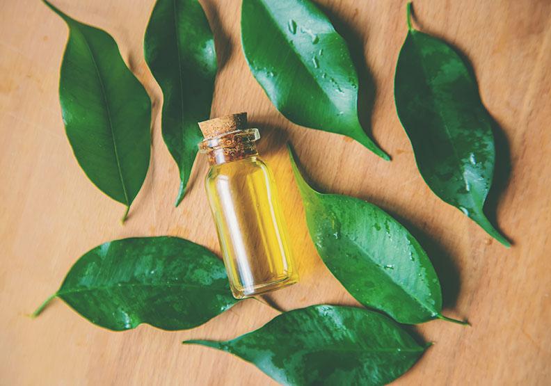 除痘好物「茶樹精油」,不只殺菌除臭還能抗感染
