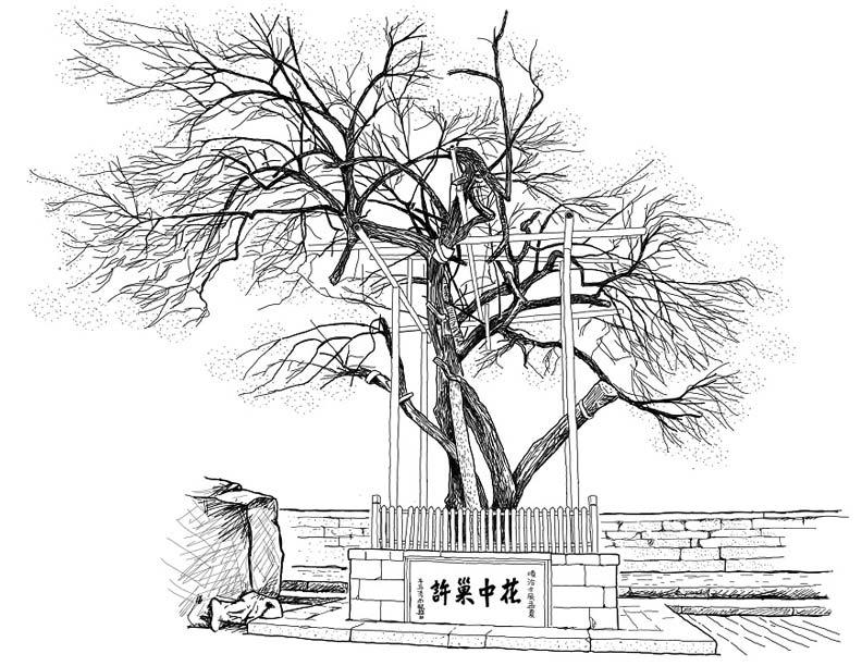 在旅行途中所遇見的老樹與景色,王浩一都會手繪作為紀念,圖為瑯琊山景區內著名的歐梅。