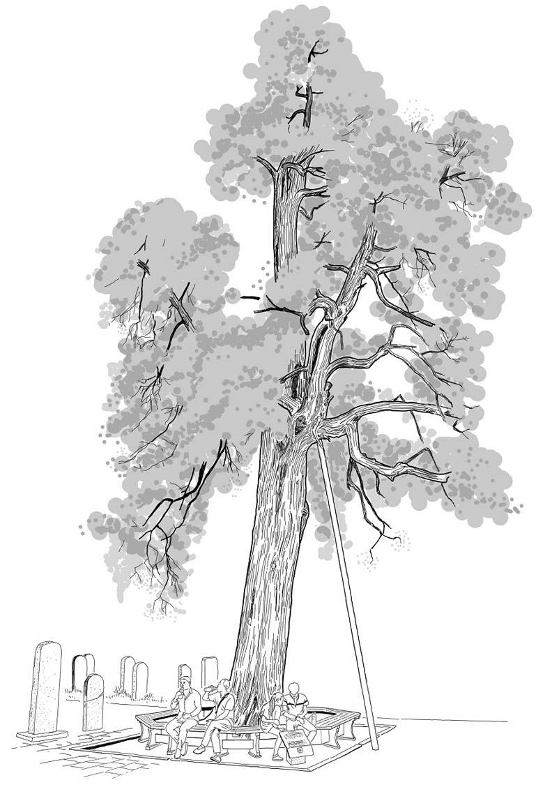 王浩一手繪的六祖手植千年柏。