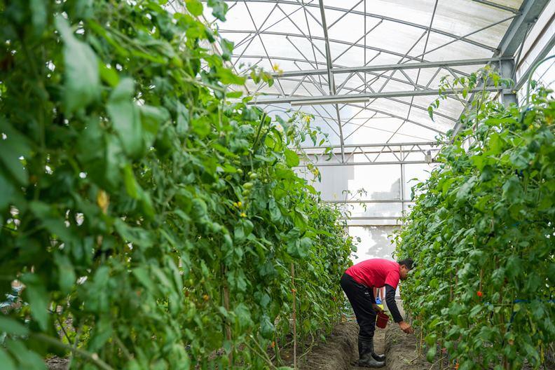 除了景觀餐廳和販售有機農產,棗稻田也提供許多手作課程農事體驗。
