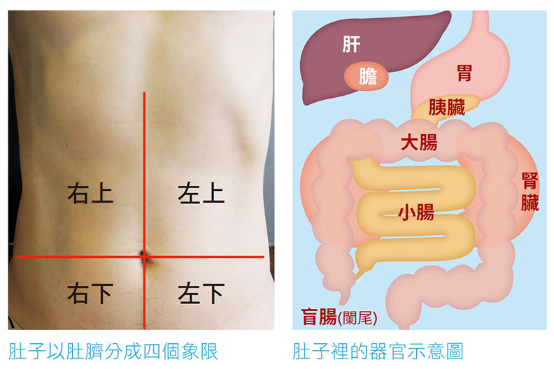以肚臍為中心,將肚子分為四個象限。