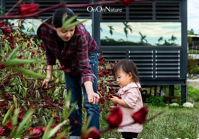 ↑園區裡的自然田種了一些洛神花,正是謝東興所謂比較不須費心的強勢作物。出自On On Natur泱泱自然FB