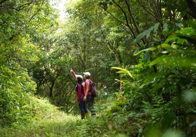 該來趟森林浴了!日本研究:有助減輕壓力、降低血壓