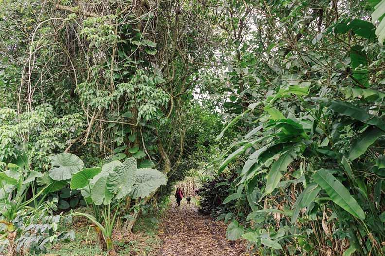 ↑探索區猶如原始森林,其實各種野菜密布,才走一圈,學校秘書長手上已經採好一把飛機菜。