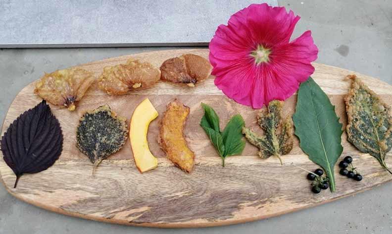 野菜天婦羅(紫蘇、南瓜、飛機草、龍葵、蜀葵花)、咸豐草烘蛋……滋味獨特,置身鄉間的療癒,很想傳遞給更多人知道。(貝殼放大、陳清枝提供)