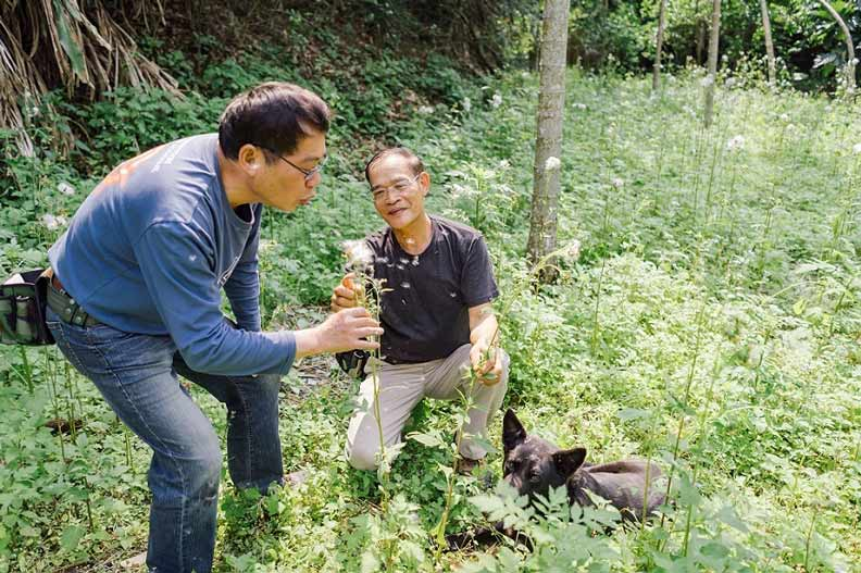 ↑陳木城(左)、陳清枝(右)和狗夥伴麻糬,在野菜學校園區裡,就像昭和草種子一樣準備起飛。