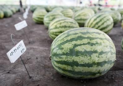 糖尿病不能吃太甜的水果?「三少一多」才是飲食關鍵