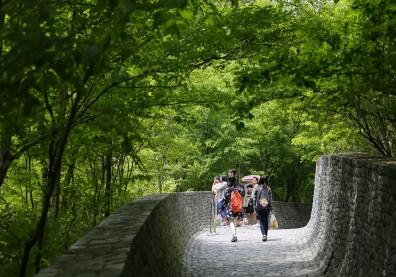 擺脫焦慮與煩惱,花10分鐘在大自然中散步吧!