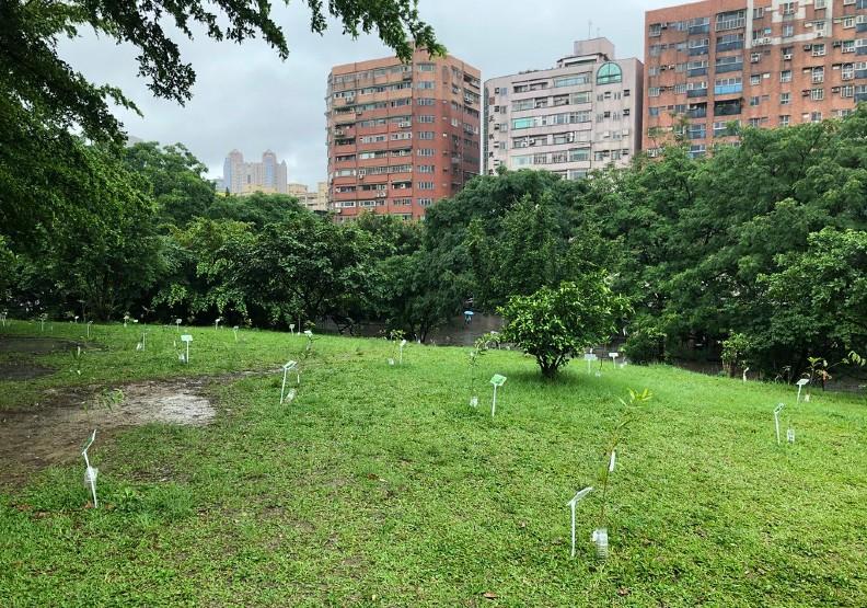 中和四號公園小山坡上新植的中大型喬木小苗,為都市林打好生態系功能的基礎。攝影:廖靜蕙