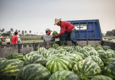 西瓜消暑又解渴,但這 3 種人千萬別吃過量!