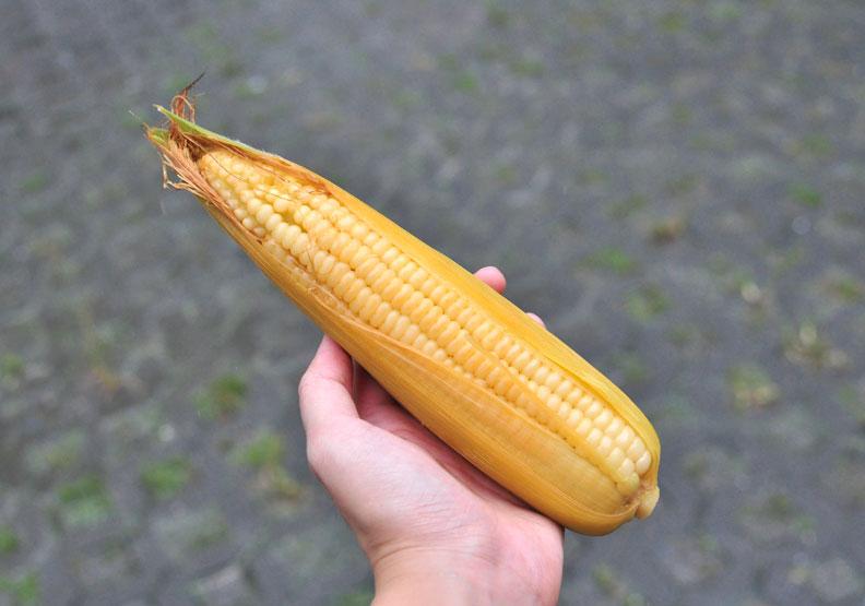 新鮮玉米的農藥殘留量多?權威農藥專家傳授 5 步清洗訣竅