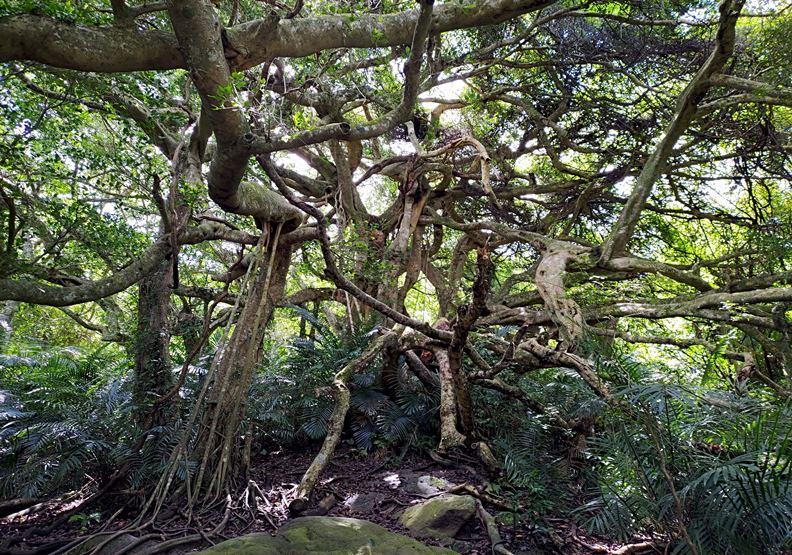 台東有「會走路的樹」?鸞山部落的永續旅遊進行式