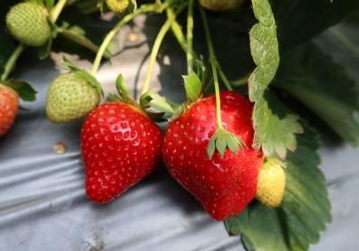 美國環保組織列出「最髒」蔬果,這水果連5年居榜首!