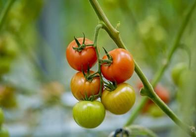 蔬菜吃夠有助軟化血管,營養師傳授「312」飲食法
