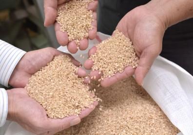 攝取超級食物不麻煩,營養師教你用「1米5麥」就能補充營養