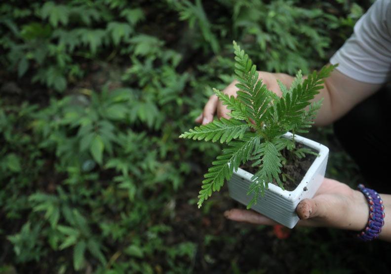馥蘭朵宜蘭里山各處可見不同種類的花草野菜。
