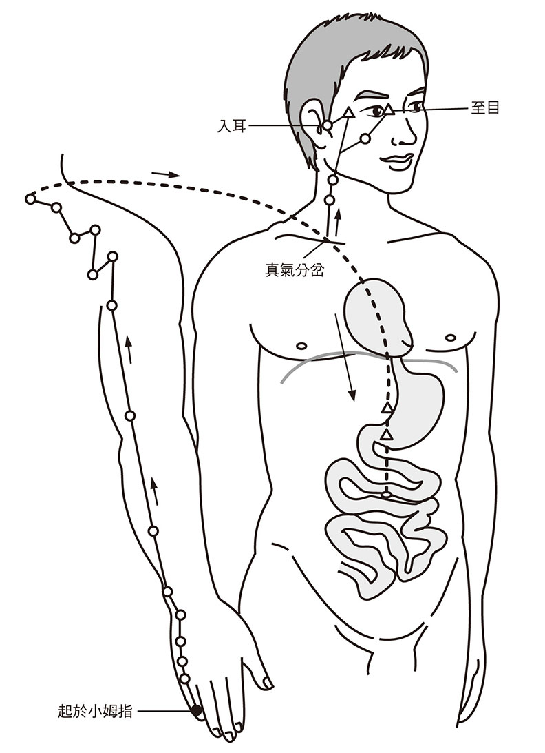 未時真氣注於手太陽小腸經,隨吸氣由手走頭。它起於小姆指,循手外側上腕,循咽下膈抵胃,入小腸。支流則循頸上頰,至目入耳。